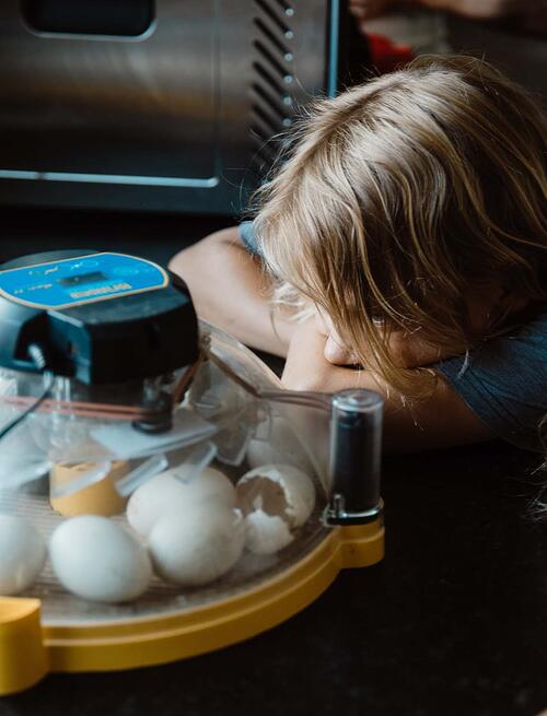Incubation is fun and educational for kids, too