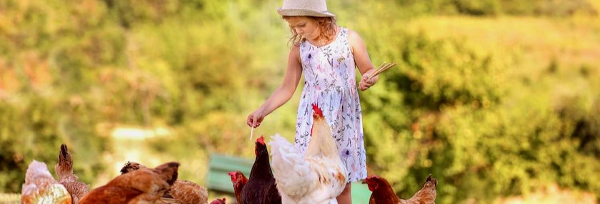 Child interacting with chickens